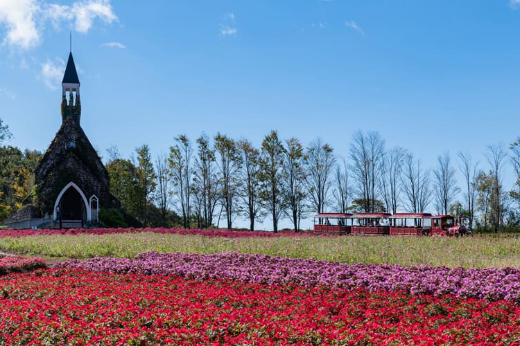 <C_011>高鷲・ひるがの高原グリーンシーズンコース「大自然とあそぶ、ひるがの高原で美と食を満喫!美しい花に癒される」