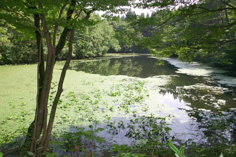 村間ヶ池 スライダー画像1