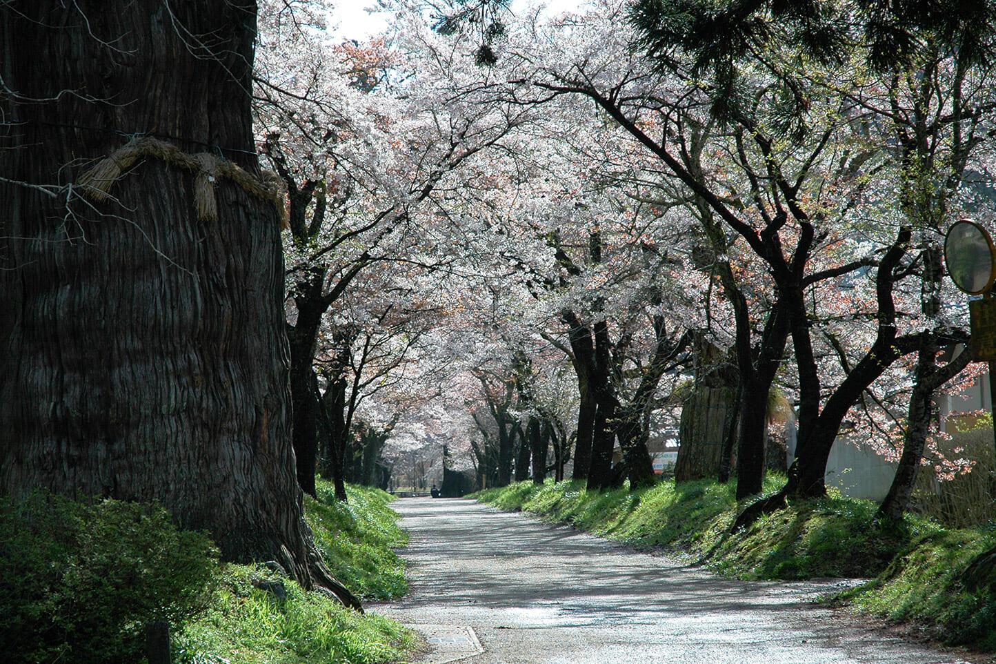 明建神社参道 スライダー画像2