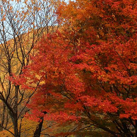 開花・紅葉・樹木