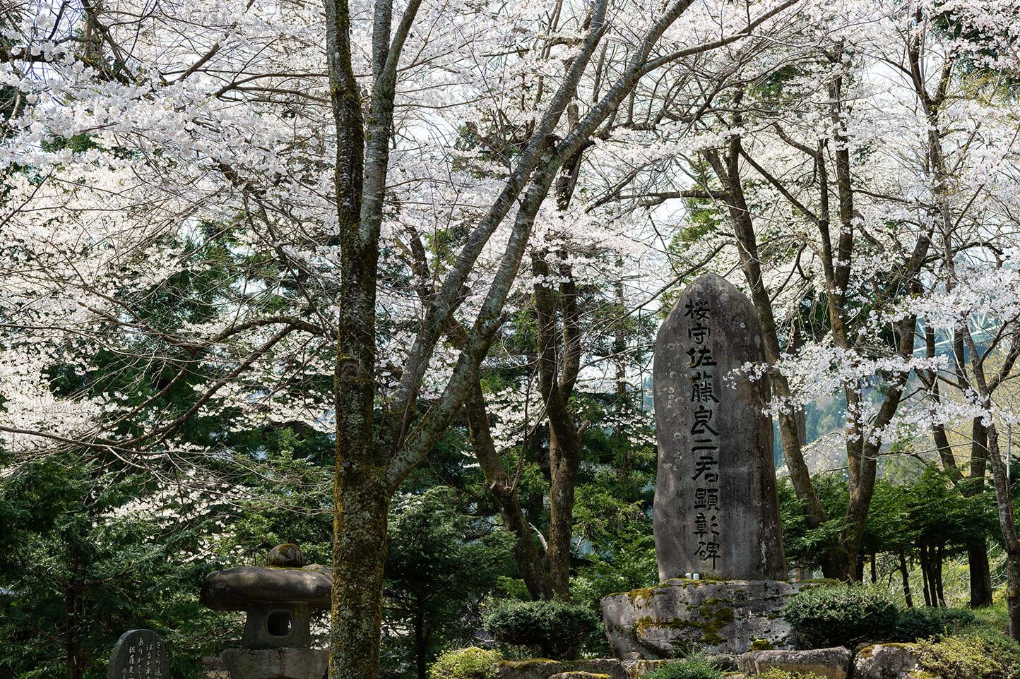 藤路の桜 スライダー画像2