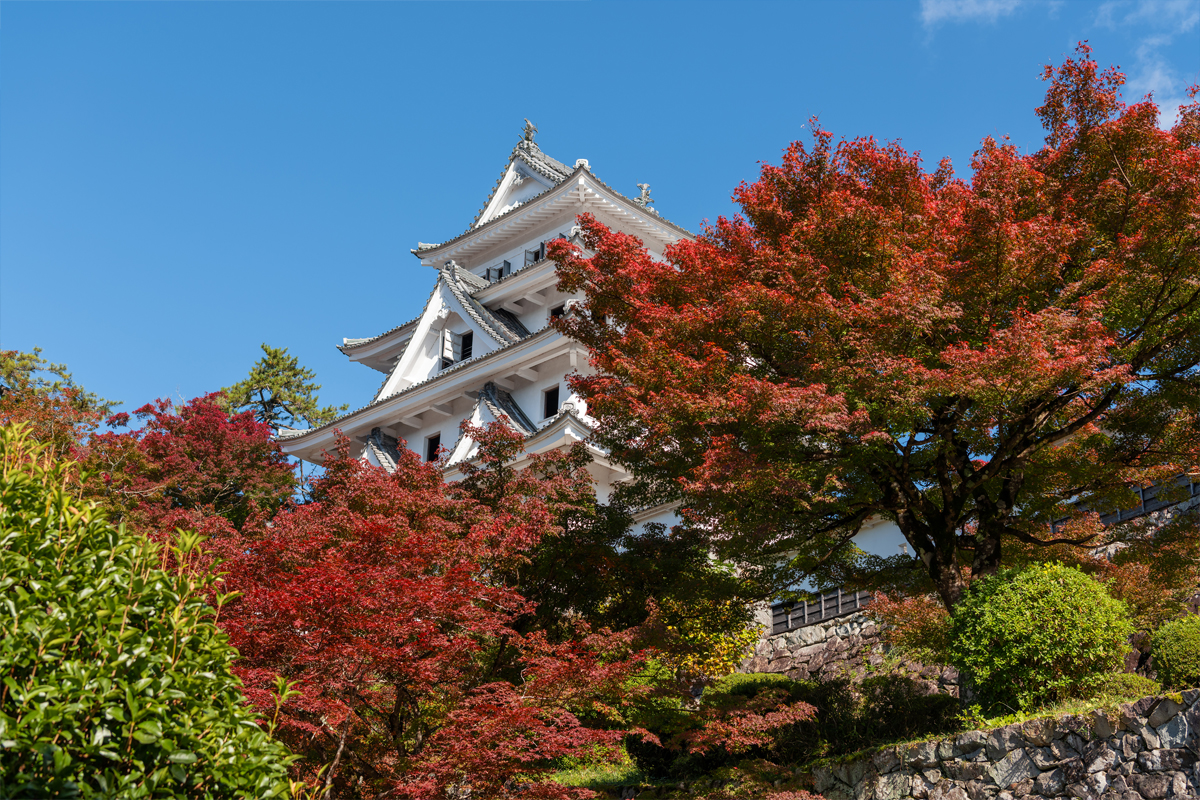郡上八幡城の紅葉 スライダー画像1