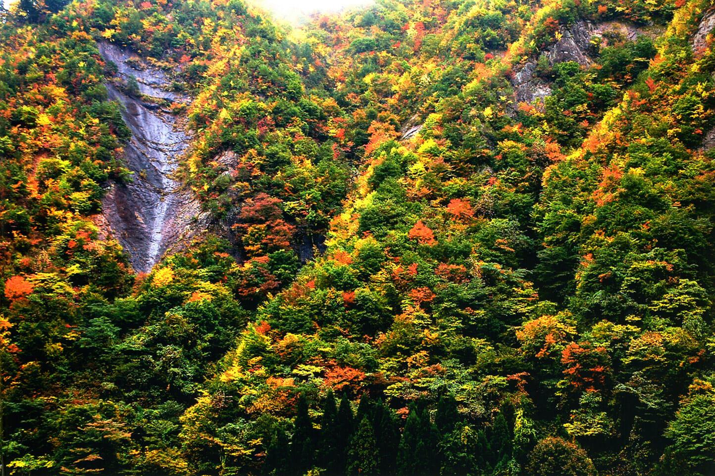 石徹白への道(県道314号)の紅葉 スライダー画像1