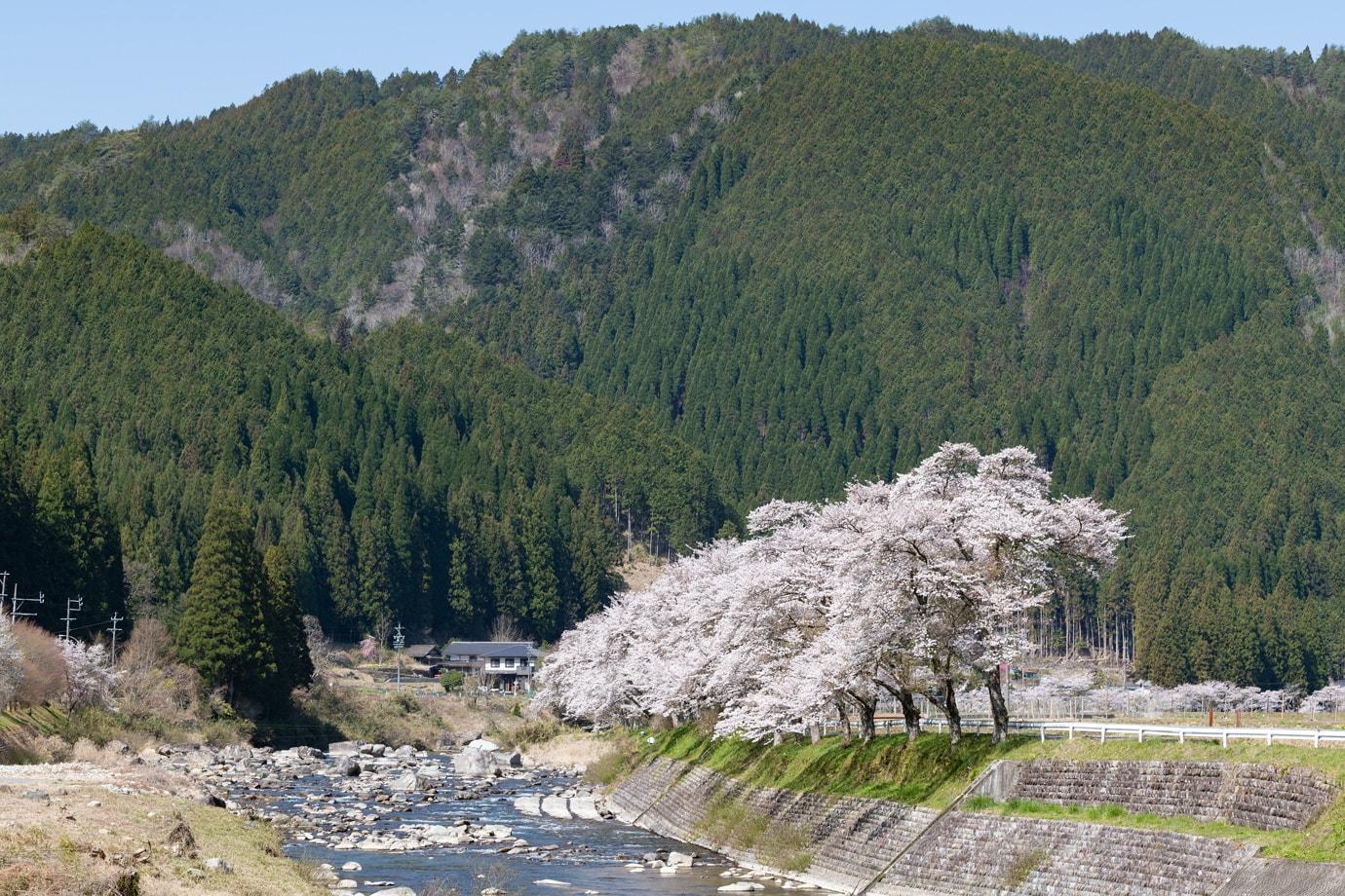 方須桜並木道 スライダー画像2