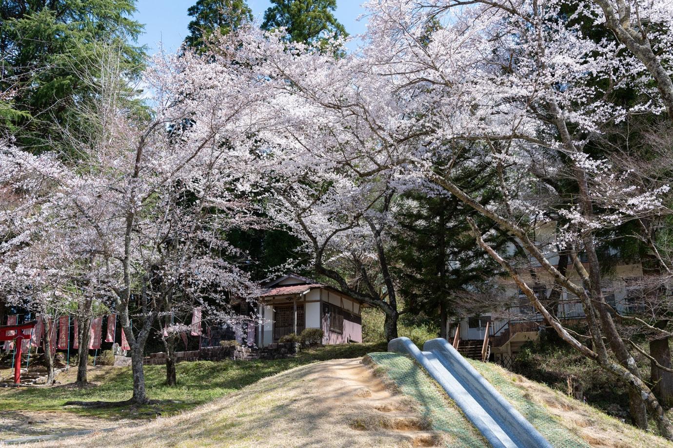 愛宕公園の桜 スライダー画像1
