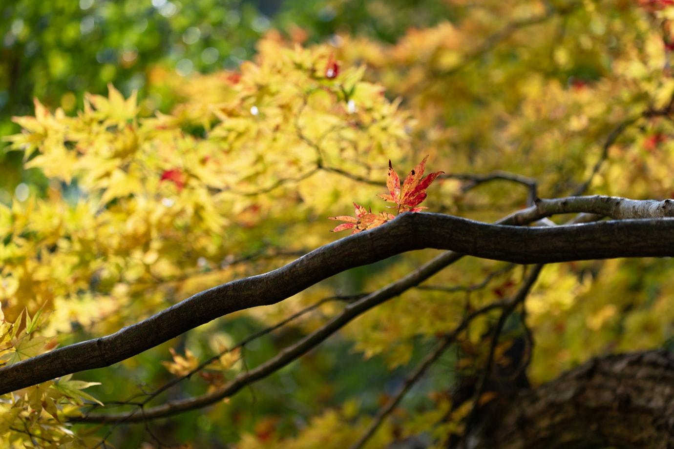 阿弥陀ヶ滝の紅葉 スライダー画像3