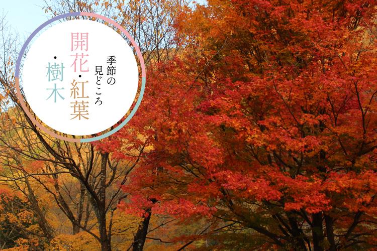 <M_007>開花・紅葉・樹木