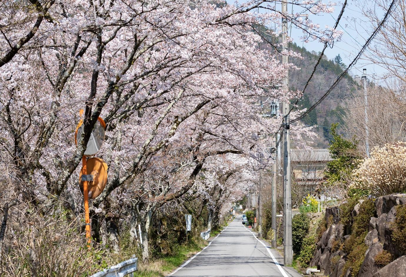五町堤(ごちょうつづみ)の桜 スライダー画像3