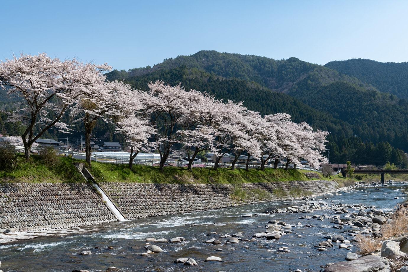 方須桜並木道 スライダー画像1
