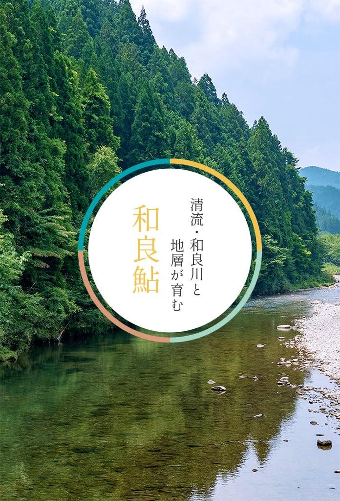 <M_031>清流・和良川と地層が育む「和良鮎」