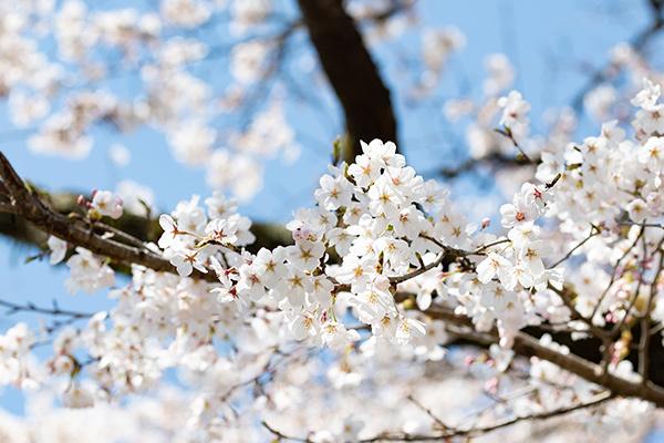 季節の見どころ開花・紅葉・樹木